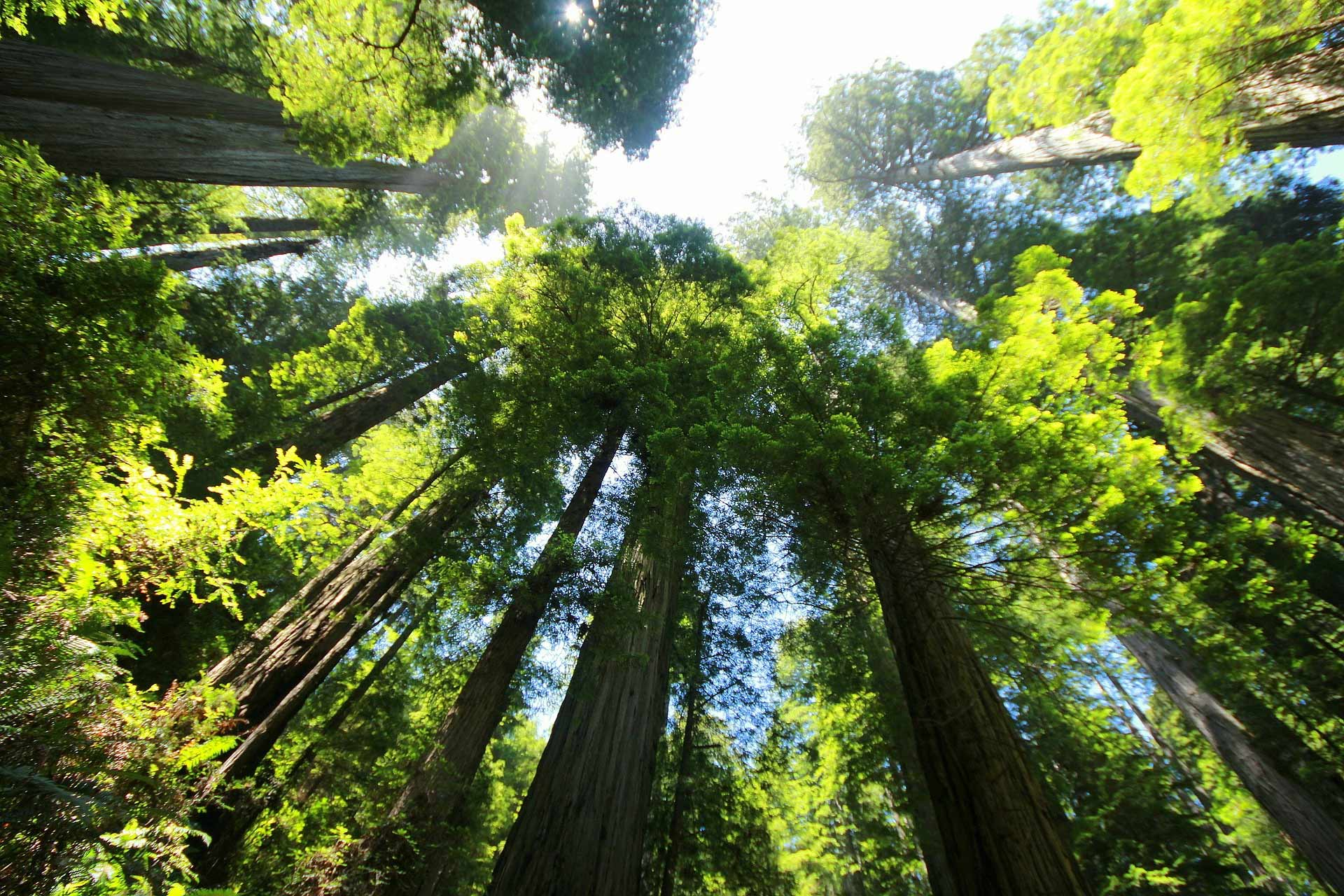 Redwood SEO Background Image